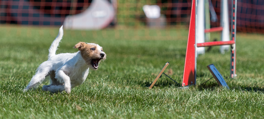 2016-08_Terrier_Cup_Dara_mit_Polly-32